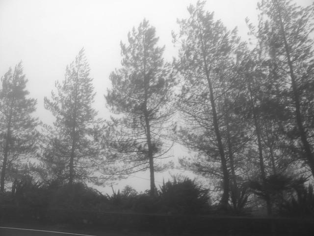 IMG_0851 Mist