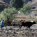Arrando con la yunta - plowing the fields with oxen; cerca de Cuquila, camino a Tlaxiaco, Oaxaca, Mexico por Lon&Queta