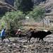Arrando con la yunta - plowing the fields with oxen; cerca de Cuquila, camino a Tlaxiaco, Oaxaca, Mexico por Lon&Queta
