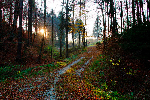 wood sun lake forest evening path slovenia slovenija gradisce