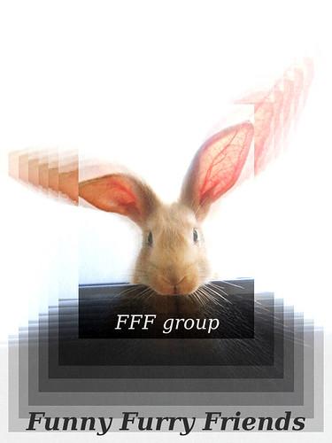 fffaward
