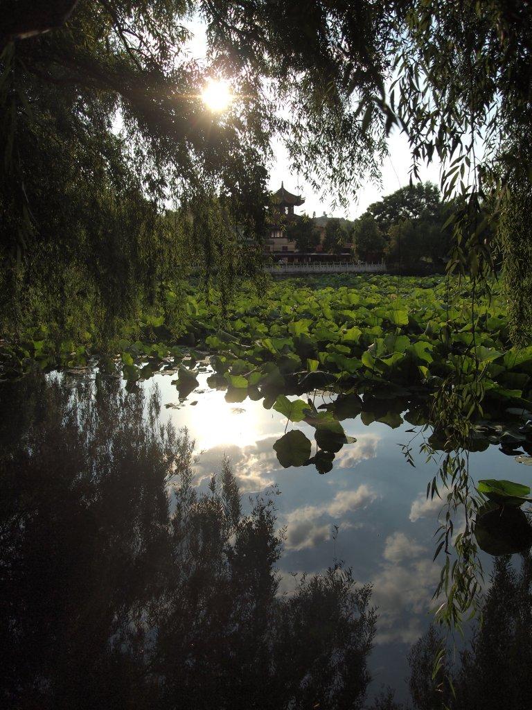 Kunming gardens