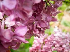Victorian Garden_16