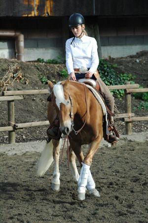 Equitazione all'agriturismo Laghel 7 ad Arco