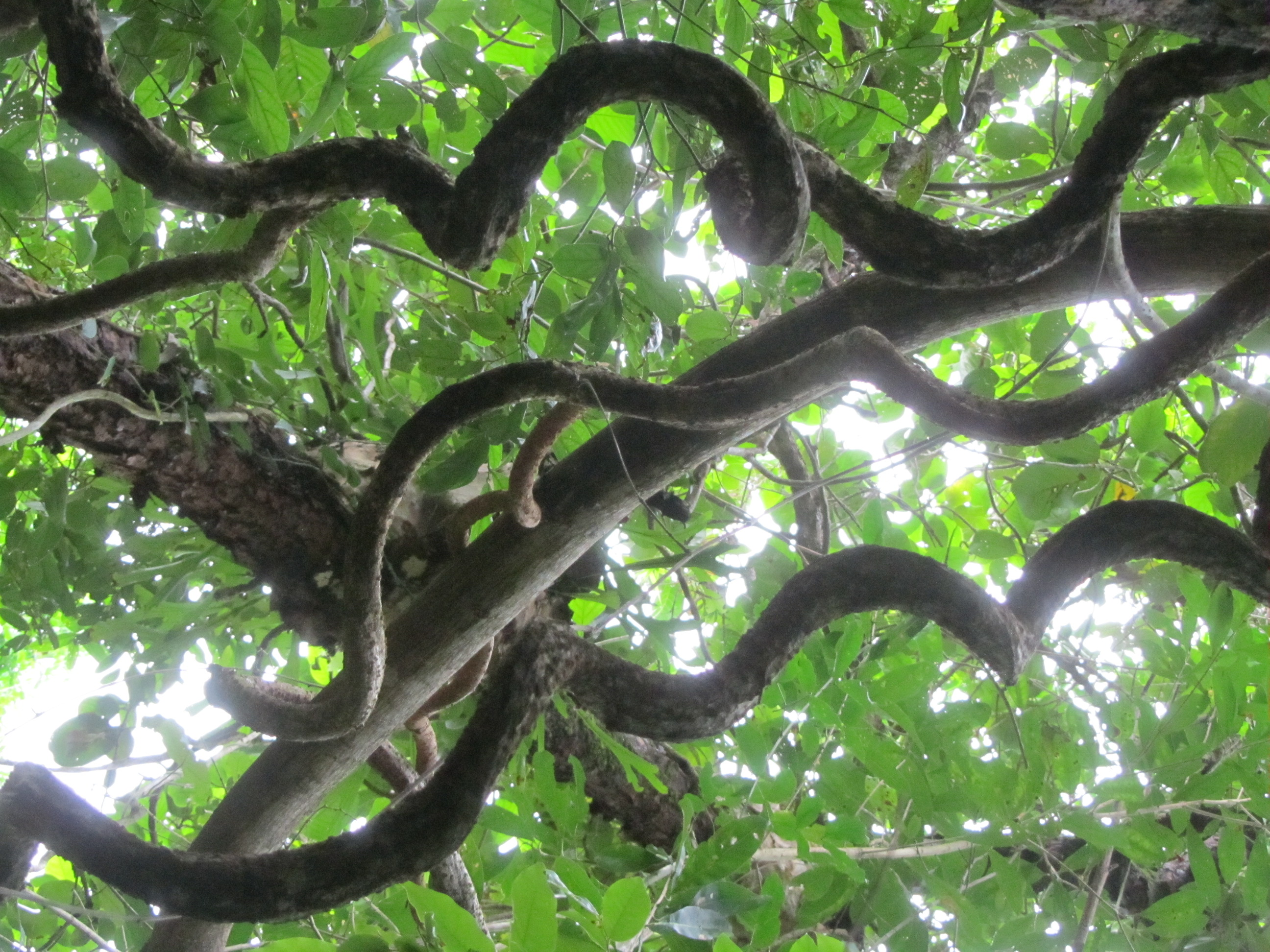 Jungles and Vines on Pinterest