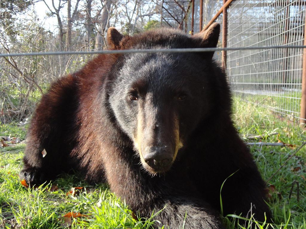 IEAS 026 | International Exotic Animal Sanctuary, Boyd Texas