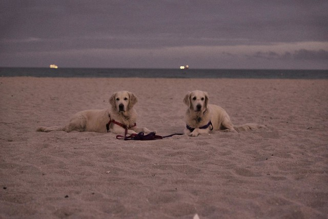 Frisket & Sailor Take South Beach (Take Ⅱ)