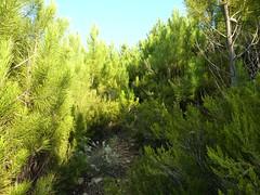 Punta Radichella par la sente de chasseurs : la sente vers le haut dans le haut du versant