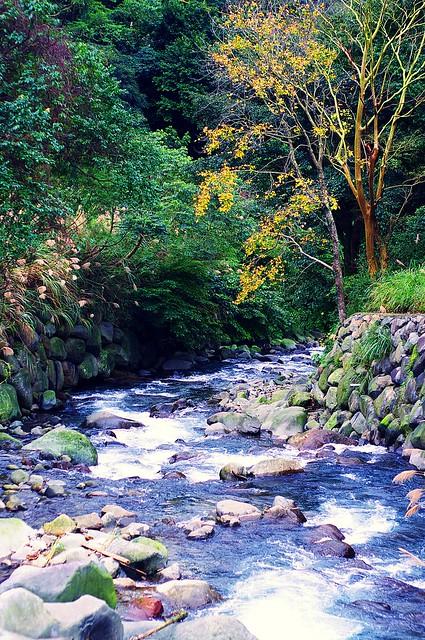 陽明山八連溪拍楓