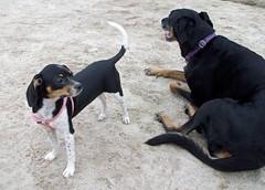 DogPark_LolaRosie_82111