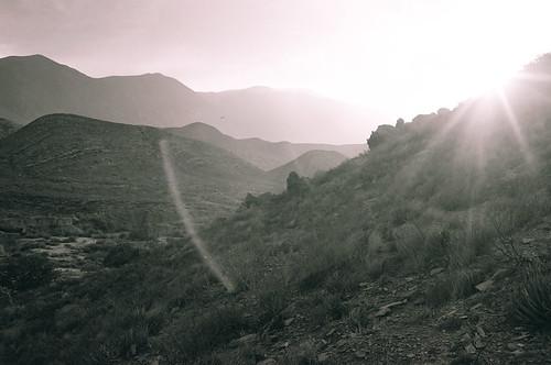 Parras 2009