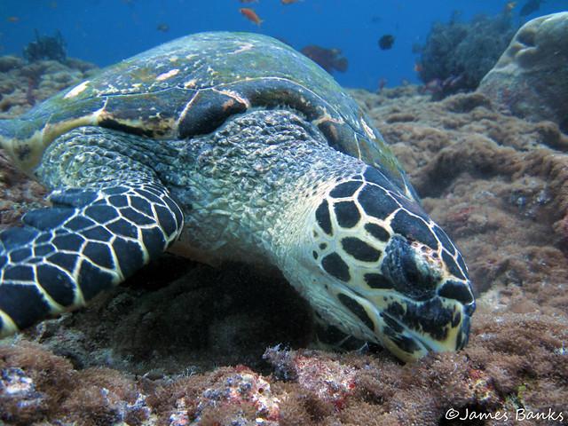 Turtle Feeding Flickr - Photo Sharing!