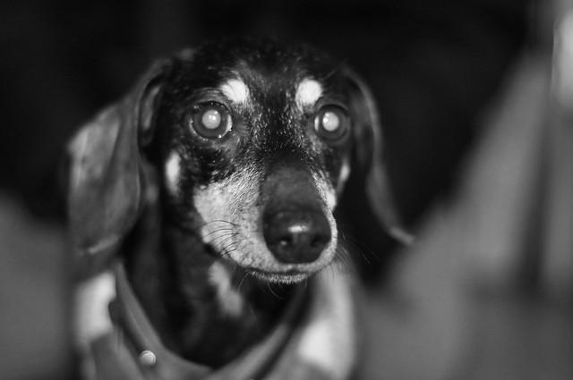 Baby Darcy Dog