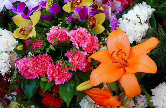 Flores ornamentales flickr photo sharing Las plantas ornamentales