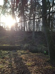 Ruperts wood in January