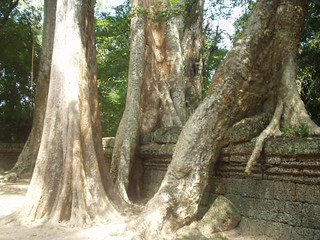 Cambodia Trees Trying to Escape