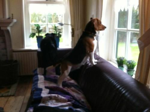 """Meine Wachhunde haben den """"Feind"""" gesichtet. by Beate Knappe"""