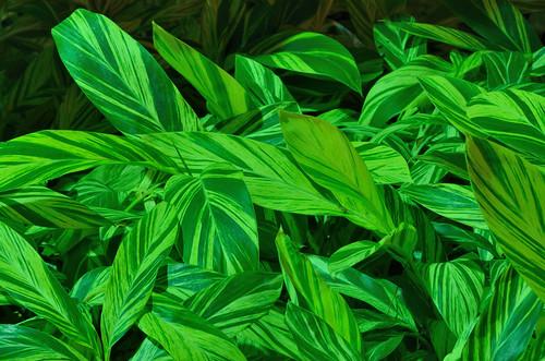 Green-enlightened plant
