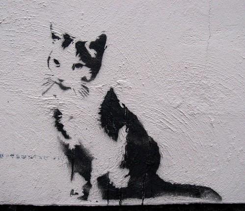 cat/stewy