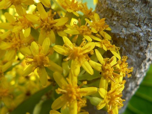 fleurs jaunes 2.jpg