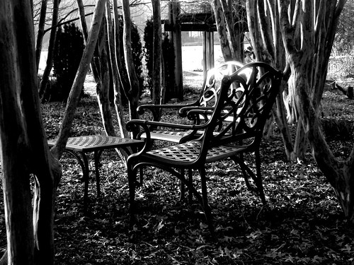 chairs and trees (2)