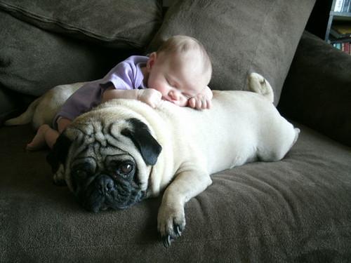 kids and pets.jpg 4