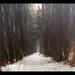 The Long Walk by subadei