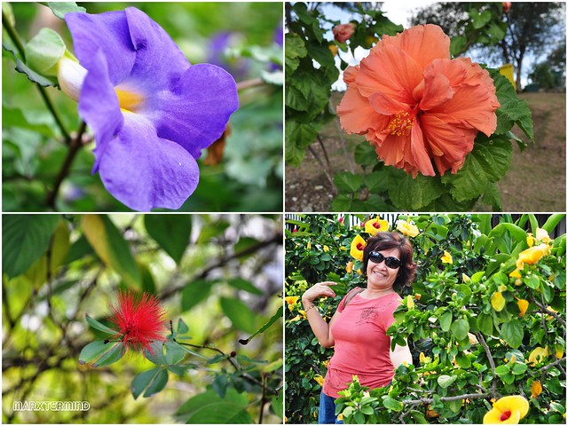 The Flowers of Zamboanga City + My Mom