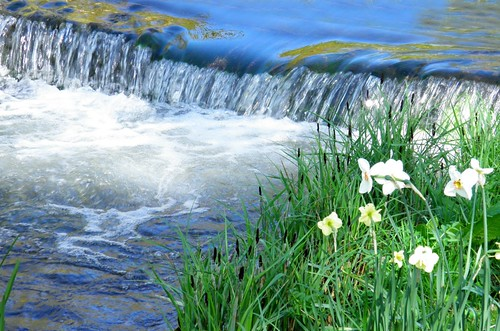 flowers nature water landscape spring scenery