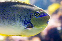 Bright-Eyed Fish