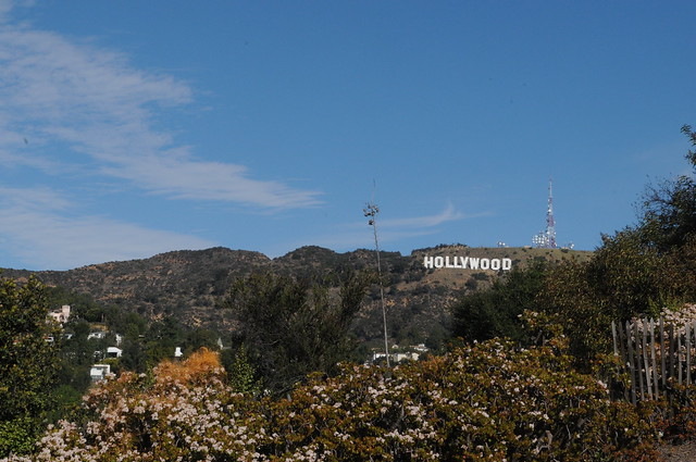 Hollywoodland Orchard 1-30-12