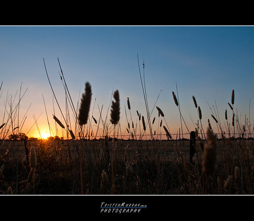 new sunset nikon day farm first years murray f28 2012 paddock tristen 1755mm d300s