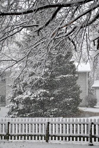 snow 2-4-12 028