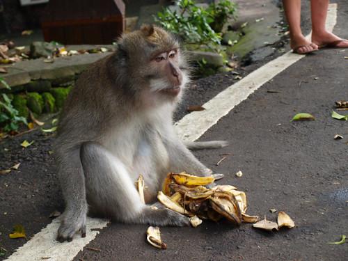 бали, обезьяны1