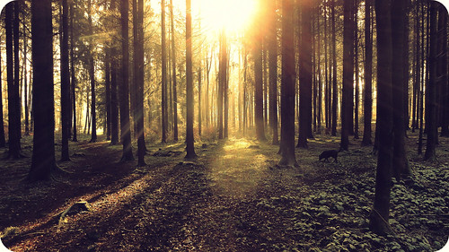 light dog sun sunlight love nature sunshine animal forest switzerland licht joy hund wald bäume hss sliderssunday