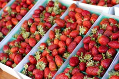 strawberries @ santa monica farmers market
