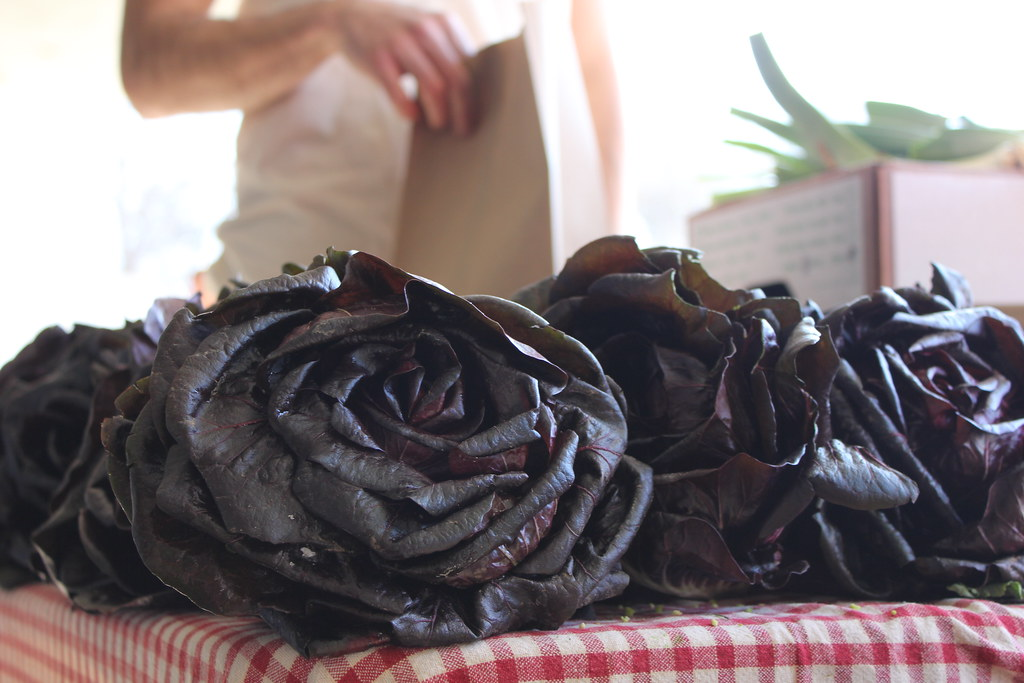 radicchio roses IMG_4227