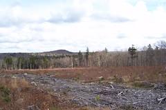 Fall 2011_9067