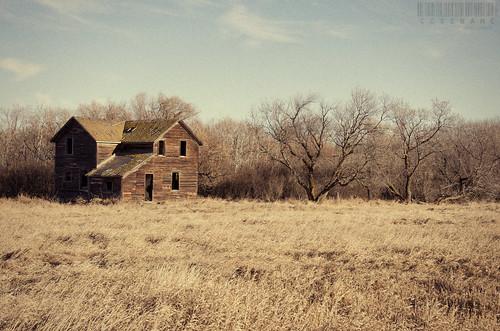 old trees winter sky house abandoned field grass landscape dry minburn alberta filmgrain 365project