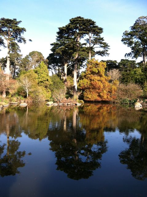 Golden Gate Park on a Sunny Winter Day