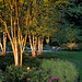 The S. garden in suburban MD with lighting designed by Outdoor Illumination