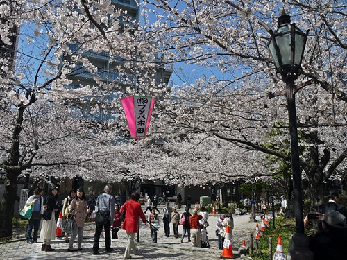 Sakura 2014 Sumida River