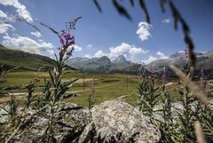 Největší přírodní park Švýcarska– Parc Ela
