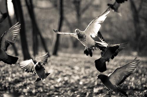 Pigeons by Valentyn Chub