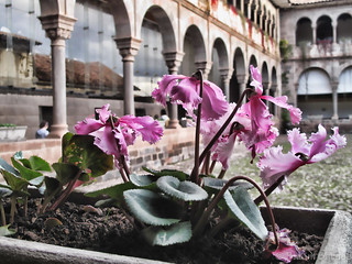 Orchids of Old Peru
