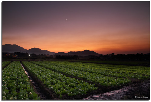 sunset sky color field canon landscape hongkong nightshot farm magic 7d 1750 香港 tamron 日落 天空 wetland longvalley a16 農田 淡水濕地 塱原 河上鄉 燕崗村 松柏朗