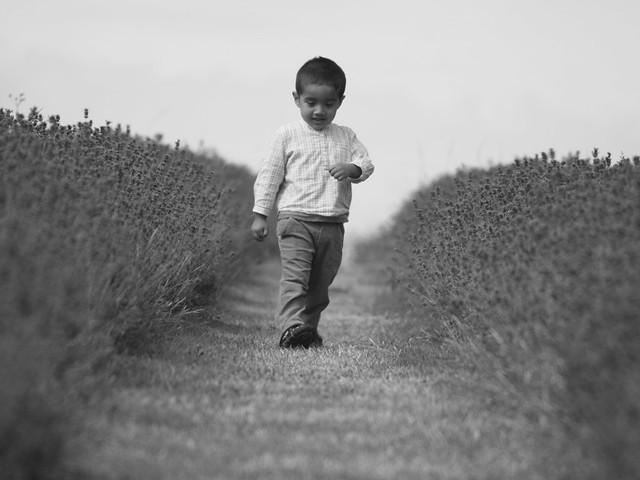A stroll in lavender fields