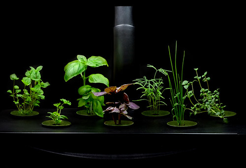 cheap hydroponics