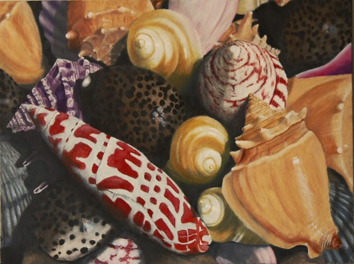 Sea Shells by Sid's art