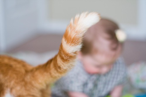 cats. sheesh.